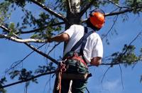 elagueur arboriste grimpeur